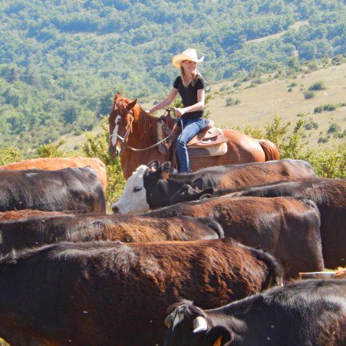 Calendrier séjours de travail du bétail 2018