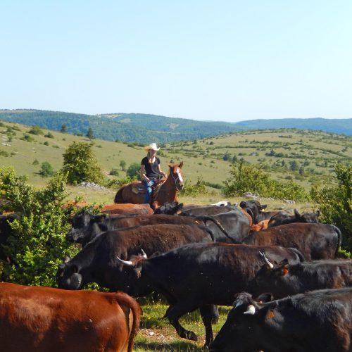 Modification de date sur le séjour bétail d'octobre