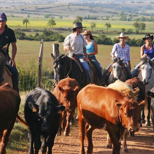Une nouvelle date de séjour de travail du bétail en juillet.