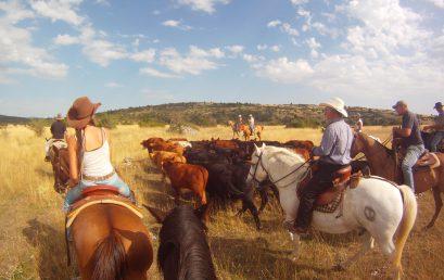 Modification de date sur séjour bétail d'août