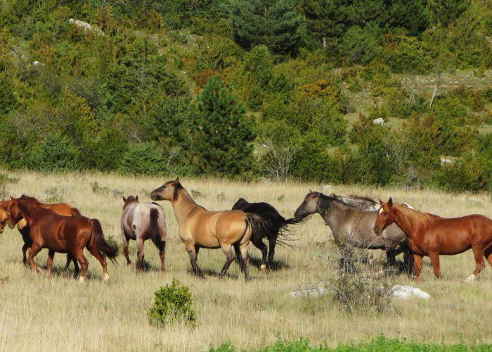 d-chevaux