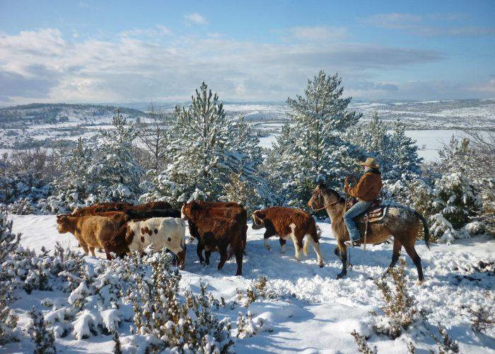 d-vaches-neige-manon