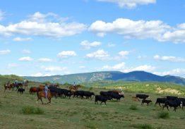 Séjour de travail du bétail 28/29/30 Août 2020