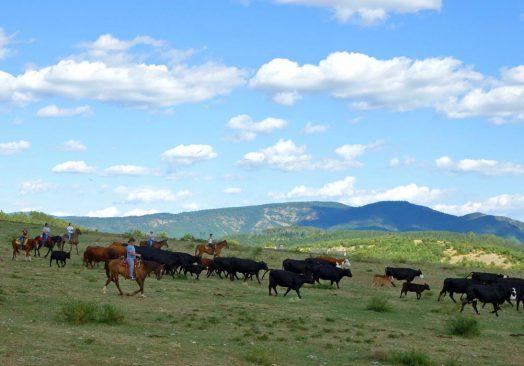 Séjour de travail du bétail 18/20 mai 2019