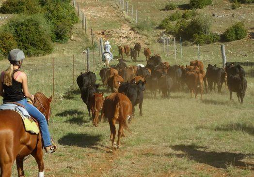 Séjour de travail du bétail 3/5 aout 2019