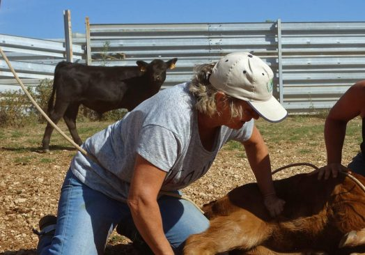 Séjour de travail du bétail 13/14/15 Juin 2020