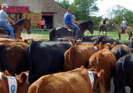 Séjour de travail du bétail 18/20 août 2018