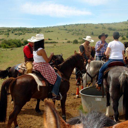 Nouvelle date de séjour bétail sur avril