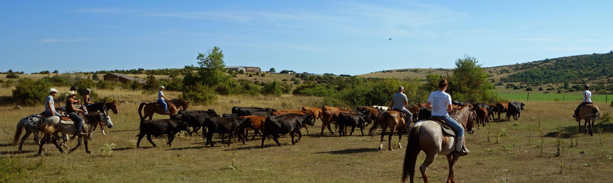 s-2-cavaliers-vaches