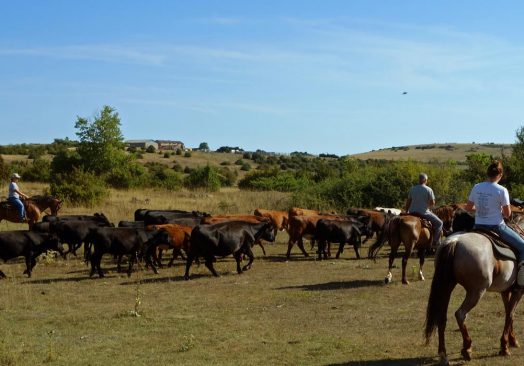 Séjour de travail du bétail 11/12/13 avril 2020