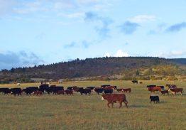 Séjour de travail du bétail 3/4/5 Octobre 2020