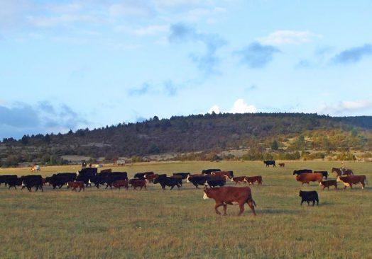 Séjour de travail du bétail 6/8 mai 2019