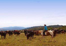 Séjour de travail du bétail 28/29/30 Août 2021
