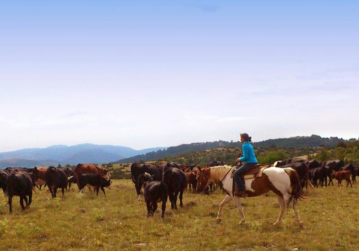 Séjour de travail du bétail 21/23 septembre 2019