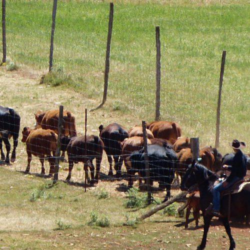 Changement de date pour le séjour de travail du bétail d'octobre.