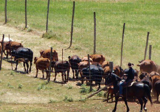 Séjour de travail du bétail 25/27 mai 2019