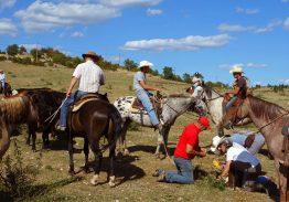 Séjour de travail du bétail 5/6/7 Juin 2021