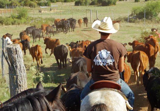 Séjour de travail du bétail 1/2/3 Août 2020