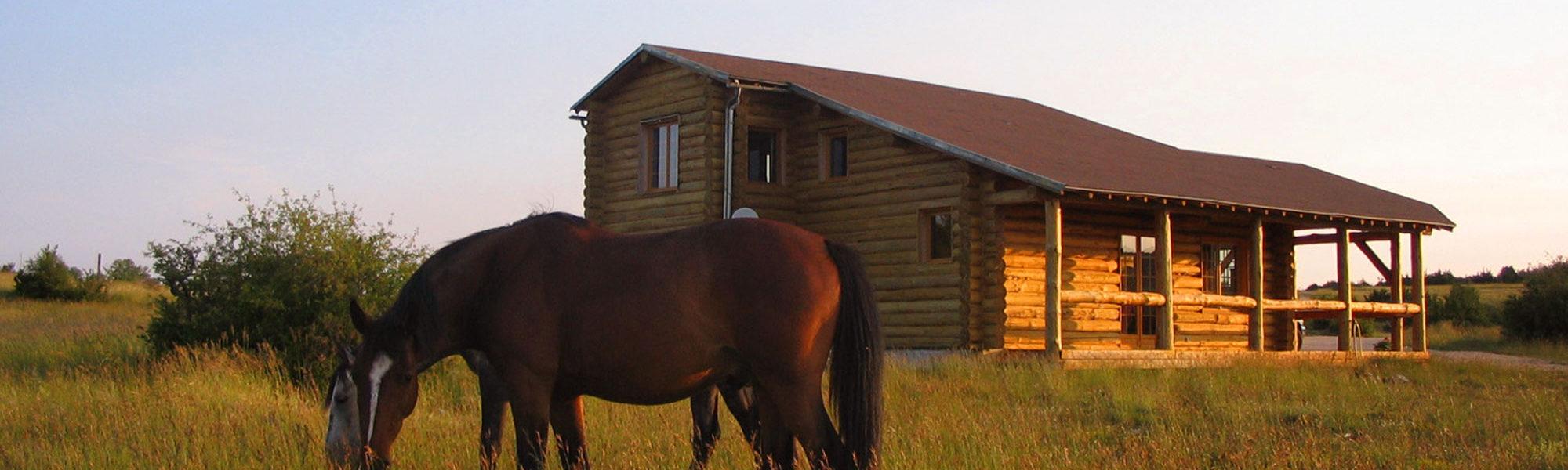 s-maison-chevaux