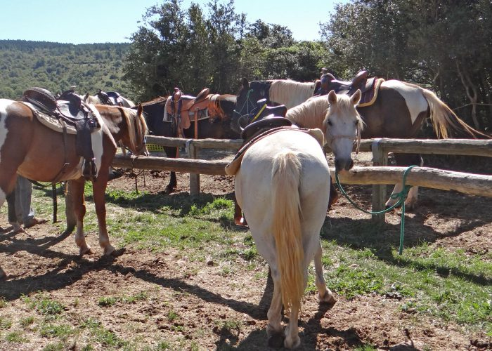 d-chevaux-attache