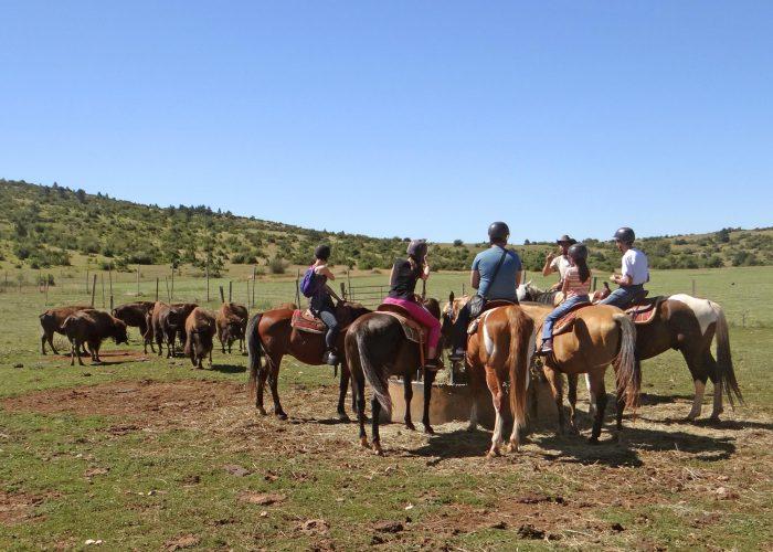 d-chevaux-bison