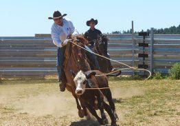 Spectacle de tri du bétail le 21 juin 2018