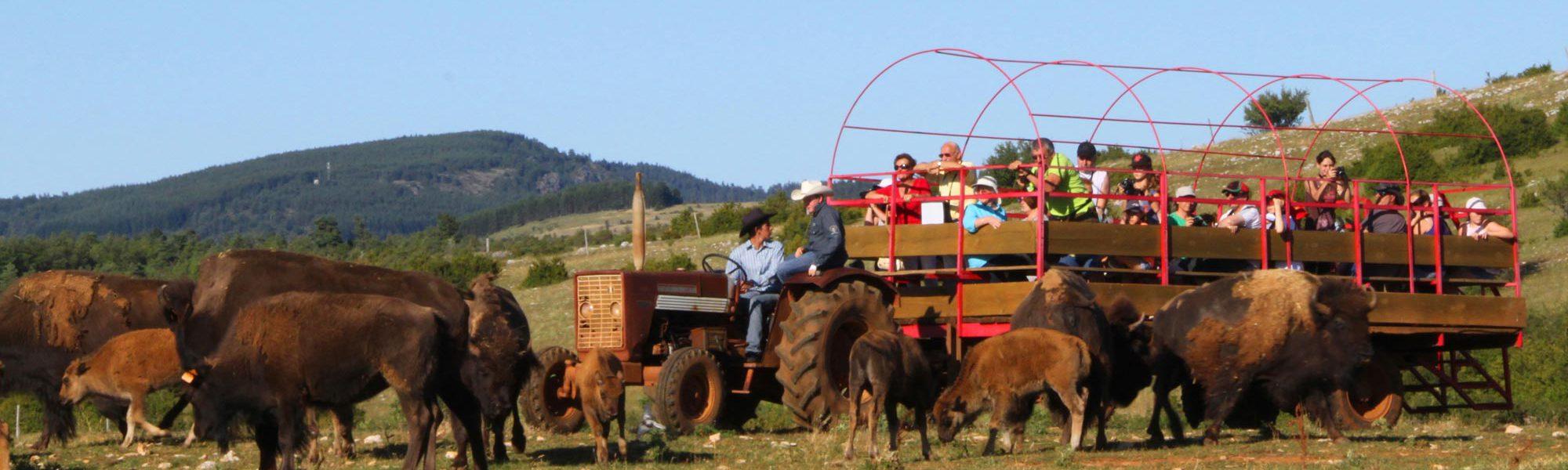 s-chariot-nathan
