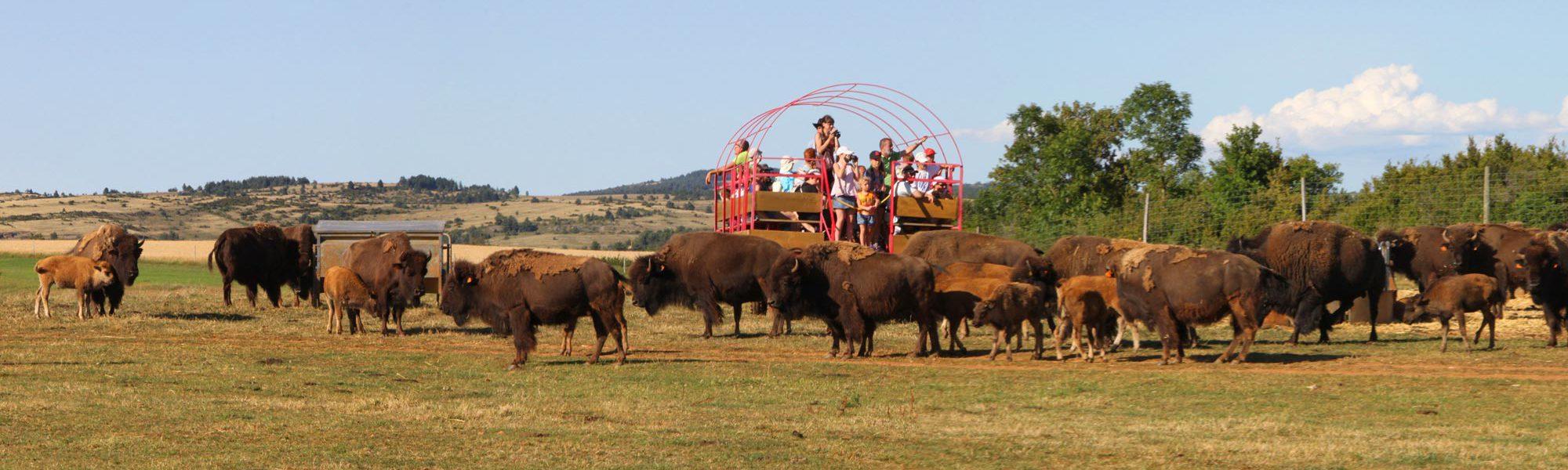 s-chariot-troupeau