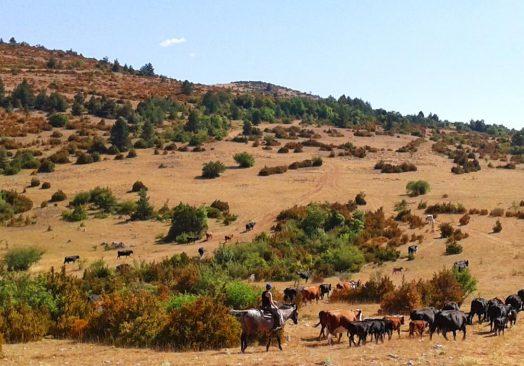 Séjour de travail du bétail 4/6 octobre 2019