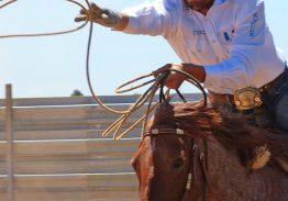 Spectacle de tri du bétail le 23 juin