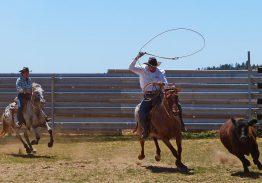 Spectacle de tri du bétail le 16 août