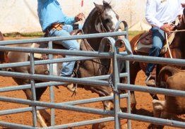 Compétition de Ranch sorting & Team penning
