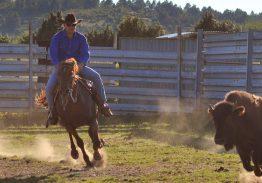 Spectacle de tri du bétail le 27 juin
