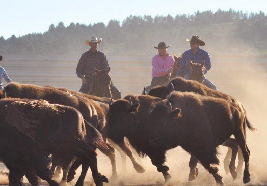 Spectacle de tri du bétail le mercredi 10 juillet 2019