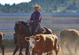 Spectacle de tri du bétail le 23 août