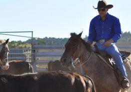 Spectacle de tri du bétail le 6 juin