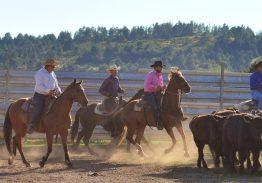 Spectacle de tri du bétail le 9 août