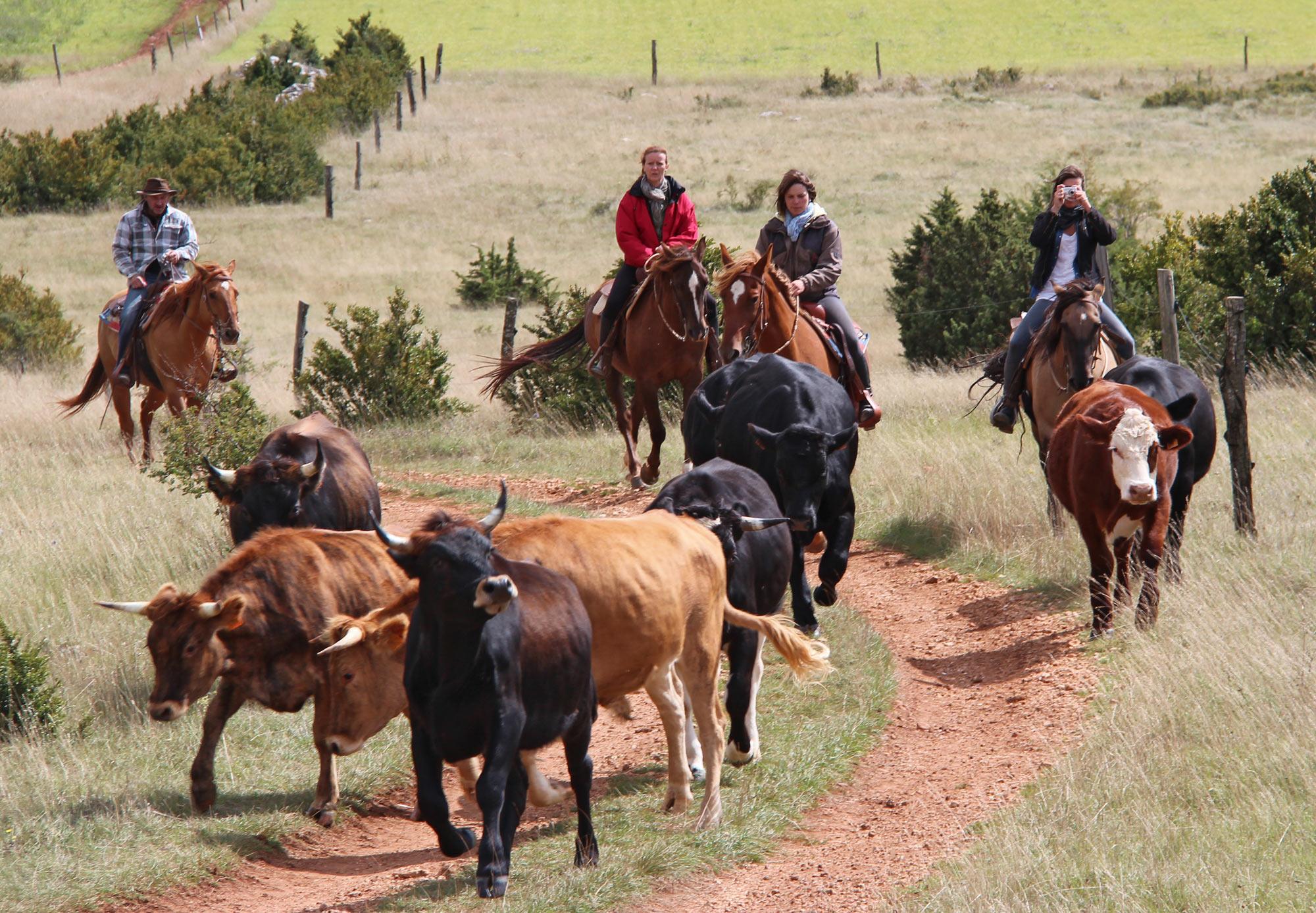 Calendrier stages de travail du bétail 2019